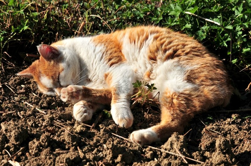 jardinage-selon-Garfield1