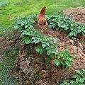 Les poules au jardin 2