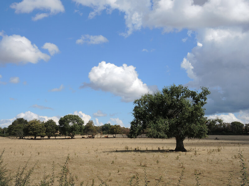 Sur la route, arbre (58)