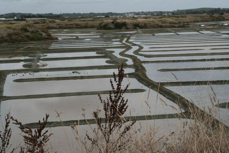 Les marais salant de Guérande