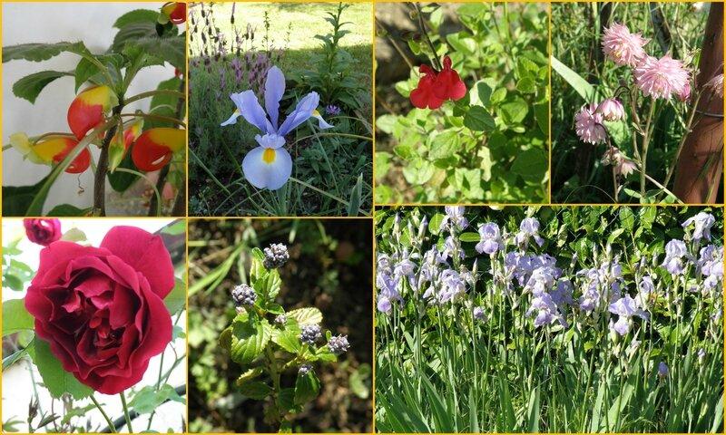 un petit tour jardin 7