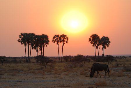 Namibie__81_