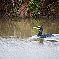 cormoran parc floral bordeaux