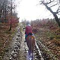 Balade à cheval dans la forêt P1080215