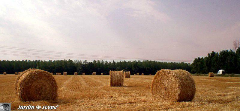 Un champ de bottes de foin dans le Loiret