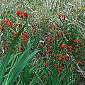 Fleurs et grenouilles 2007