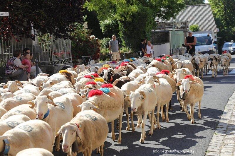 Photos JMP©Koufra 12 - Le Caylar Mouton Transhumance - 20062018 - 066