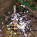 Le vaudou du plus grand marabout médium fagni du monde