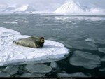 National_Geographic_Wallpapers_034