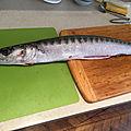 Baracuda mariné