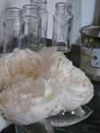roses_anglaise_008