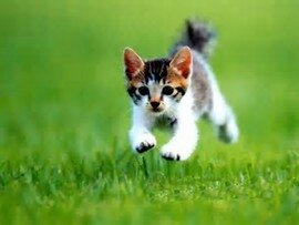 chat-rapide