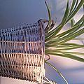 Un pot récup pour ma plante récup ;)
