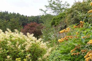 Le Mesnil-Boeuf fleurs du Cassel rendez-vous aux jardins 2013