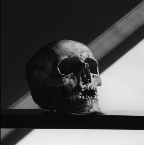 Robert Mapplethorpe, Skull, 1988, Gelatin silver print, Paper: 40 x 40 inches (101.6 x 101.6 cm); Framed: 43 1/2 x 43 1/2 inches (110.5 x 110.5 cm). Sean Kelly Gallery