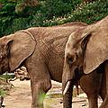 Elephant-(14)HR