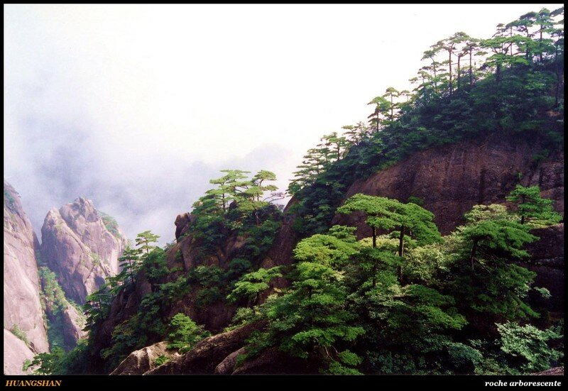 HUANGSHAN - roche arborescente