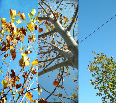automnes1_copie