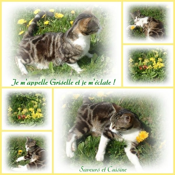 Ma petite chatte Griselle