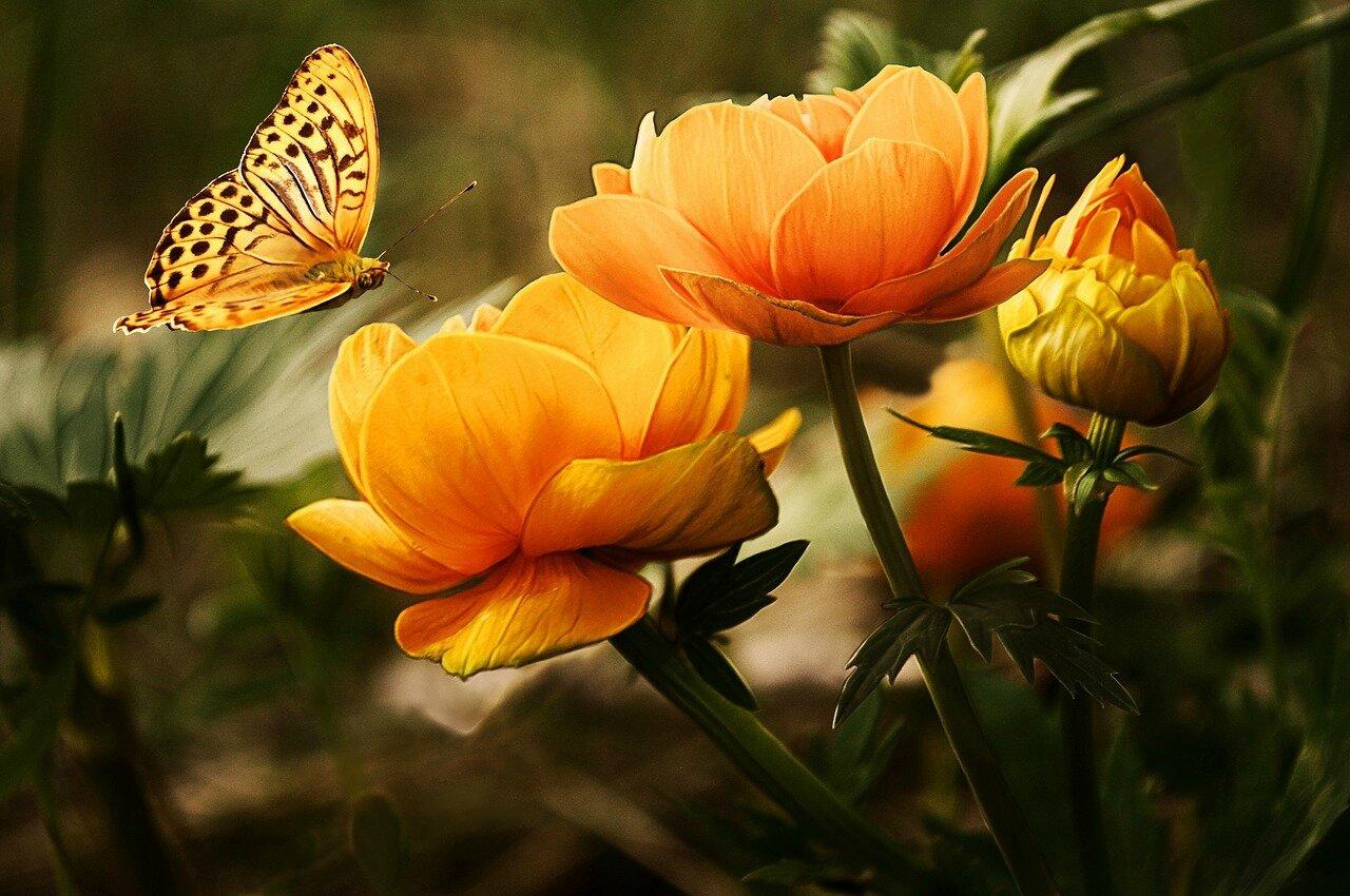 Poème : La nuit d'un papillon diurne