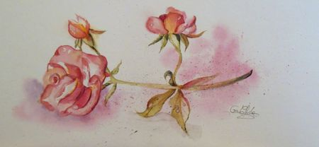 Aquarelle la rose photo ora chiche (1)