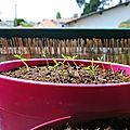Le nouveau rythme de l'apprentie jardinière