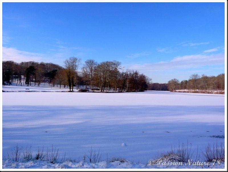 Forêt de Rambouillet sous la neige (21)