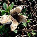champignon-05855