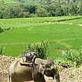 treck eleph P1190329