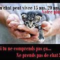Texte à méditer - réfléchissez avant d'adopter un chat !