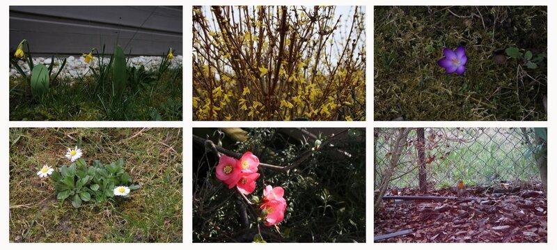 février le jardin