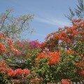 Saison des fleurs