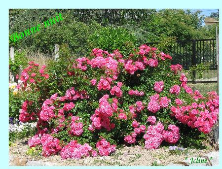 b_n_roses_buissonPhFBPat