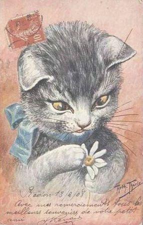 Cats & garden (1)
