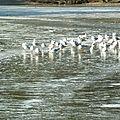 Février glacial - 4 - soleil sur l'étang glacé
