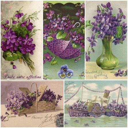cartes violettes