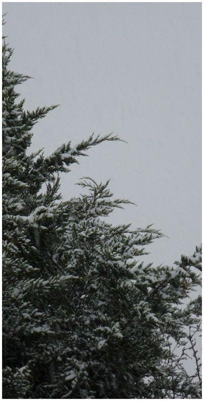 Matin blanc 3 - 28 novembre 2010