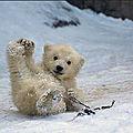 Le chant de l'arctique (walrus)