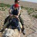 Promenade en dromadaire dans les dunes vers Essaouira