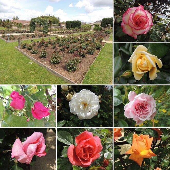 Terre de Roses 2