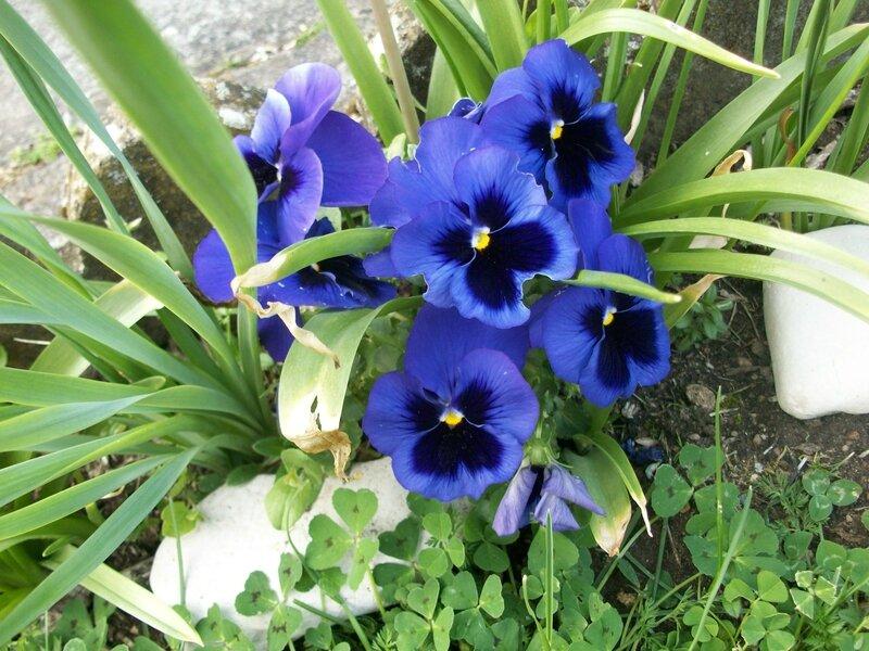 fleurs de printemps 007