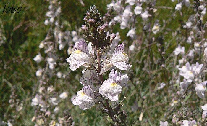 fleurs en grappes terminales