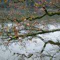 reflet dans l'eau glacé