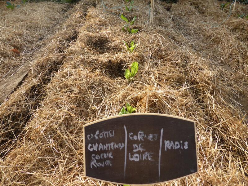 24-serre, semis, plants (6)