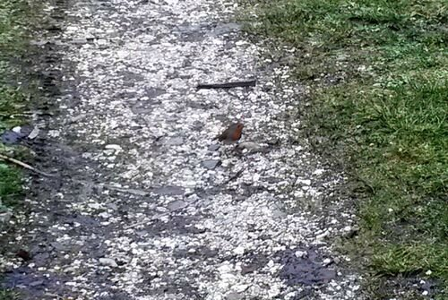 010616_bird (2)
