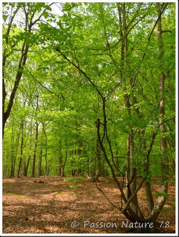 Balade en forêt (1)