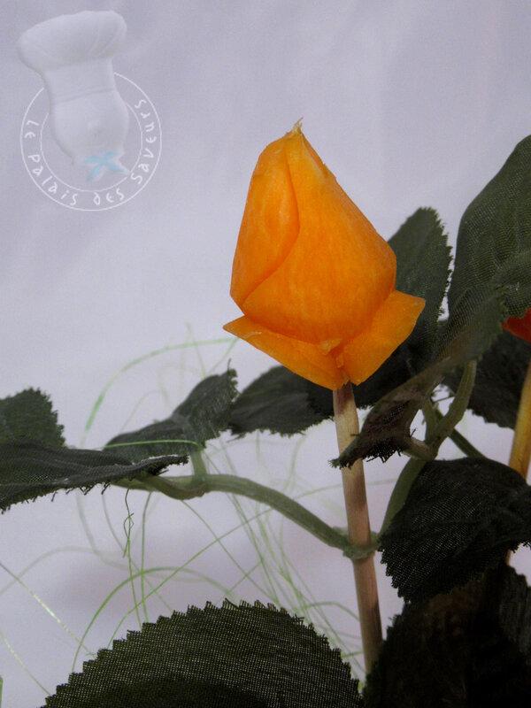 Bouton de rose fermé sur carotte