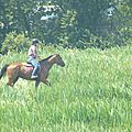 Jeux équestres manchots 2013 (173)