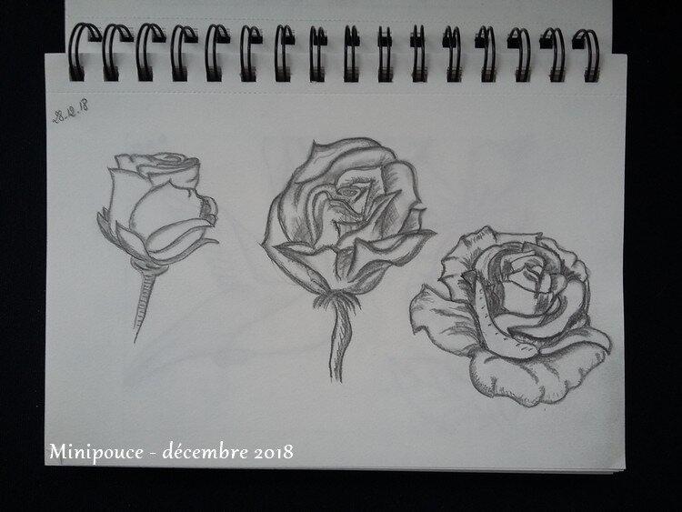 5 - roses