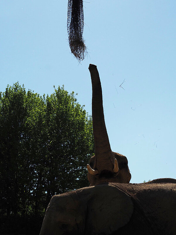 zoo-beauval-animaux-elephants-21